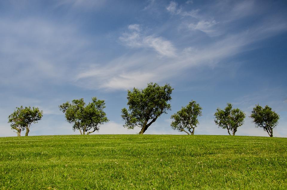 tree life, brindisi, architetto, idea, brevetto, albero, ibrido, fotovoltaico, eolico, acqua, piovana, riciclo, urbano, giardino, sostenibilità, tecnologia, futuro