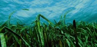Innovazioni-green-alghe-verdi-idrogeno-produzione-cue