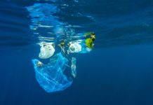 plastic bank, plastic, oceano, vancouver, haiti, filippine, rifiuti, denaro, social plastic, katz, valore, economia, riciclo, società