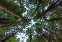 elettricità, iit, mazzolai,plantoid, piante, foglie, vento, foreste, energia, harvesting, innovazione, tecnologia, rinnovabile, ambiente, ricerca, advanced functional materials