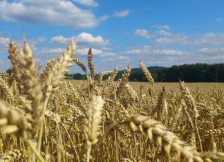 solstizi-giugno-dicembre-effetti-agricoltura-ambiente-maree-energia-rinnovabili-eolico-fotovoltaico-lavoro-campi-trebbiatura-raccolta-CuE
