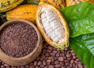 Enzimi, Biotech, Cacao, Alimentare, Ingegneria Biochimica, Farmaceutica, Proteine, Catalisi, Energy Close-up Engineering