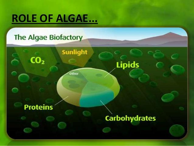 Bioreattore, reattore, chimica, biochimica, alghe, microalghe, intelligenza, artificiale, startup, CO2, cambiamenti, climatici, ambiente, biomasse, innovazione, Energy Close-up Engineering