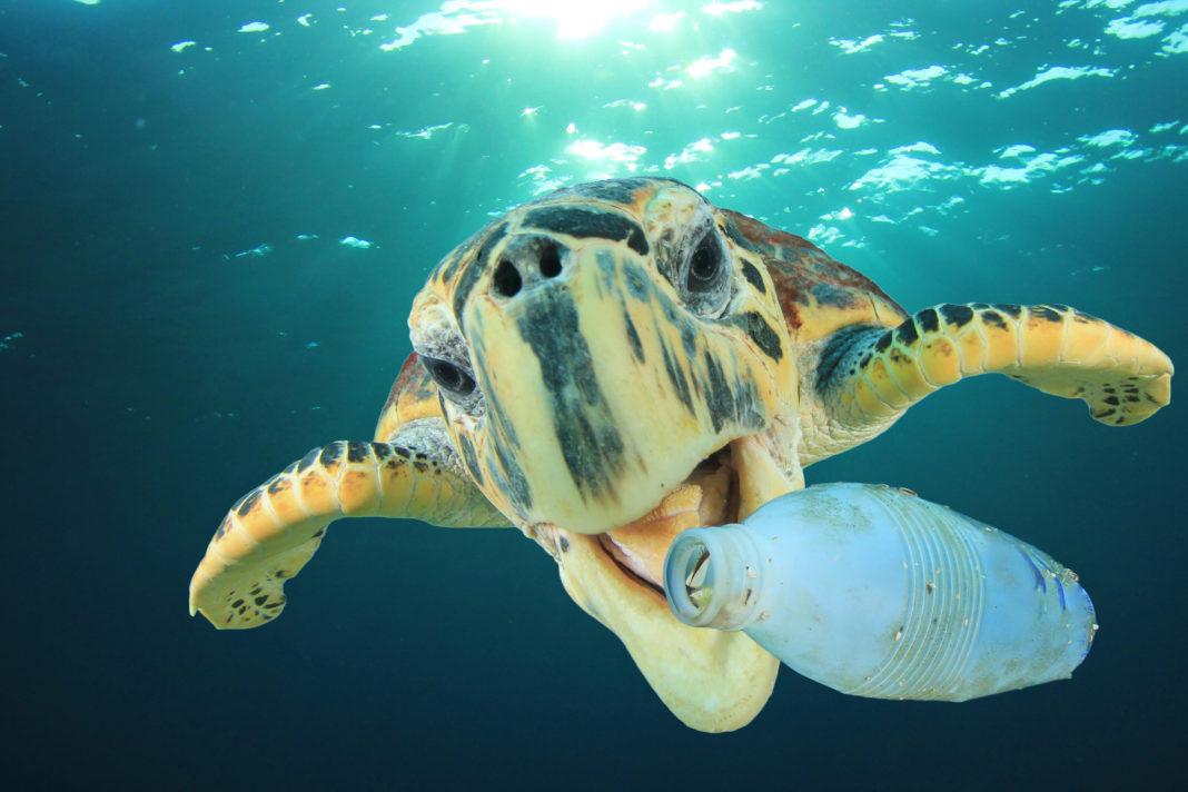Plastica, microplastica, plastiche, microplastiche, plastic age, plasticrust, rifiuti, fossili, scorie, nucleari, oceani, natura, ambiente, dinosauri, sedimenti, Energy Close-up Engineering.