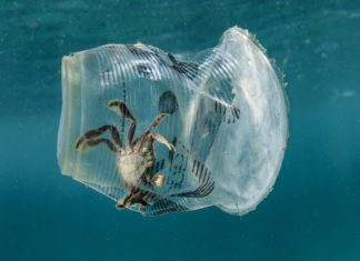 Microplastiche, inquinamento, dieta, contaminazione, rifiuti, ambiente, salute, rischio, ricerca, WWF, Energy Close-up Engineering