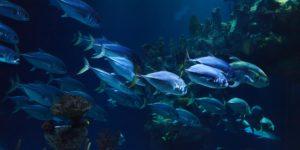 Sempre meno ossigeno negli oceani