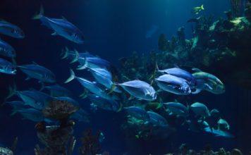 oceani-ossigeno-riduzione-riscaldamento-globale-emissioni-gas-serra-alghe-pesci-temperature-pesca-cause-conseguenze-acque-deossigenazione-CuE