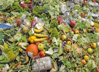 Spreco alimentare, sostenibilità, 5 febbraio, osservatorio, Energy Close-up Engineering