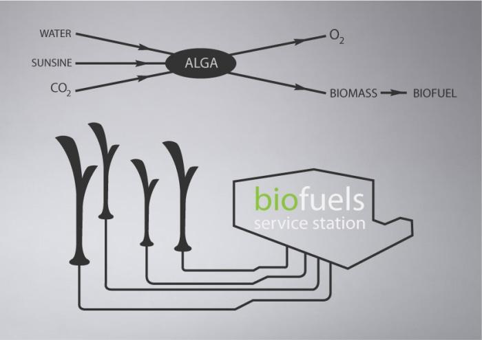 biolamp, lampione, cattura, co2, smog, urbano, inquinamento, alghe, biomassa, salute, rinnovabili, tecnologia, illuminazione, energia, rifornimento, EnergyCuE