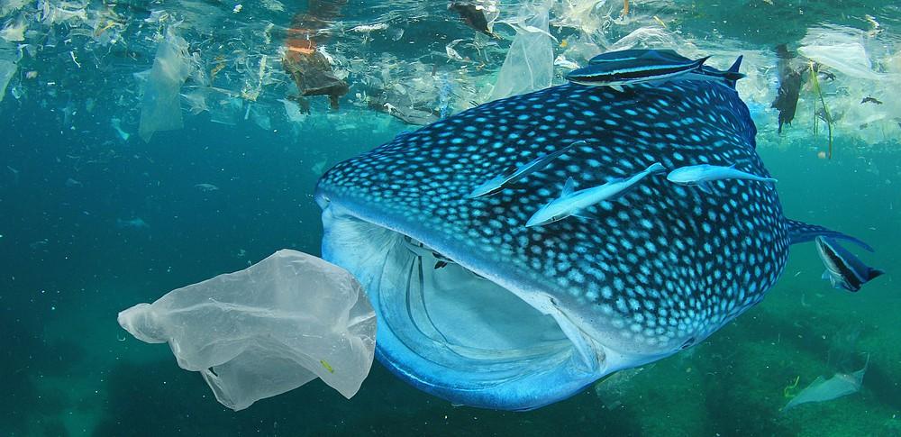 microplastiche, plastica, oceano, mari, fondali, inquinamento, ambiente, animali, uomo, natura, impatto, consumo, ricerca, analisi, dati, Energy Close-up Engineering