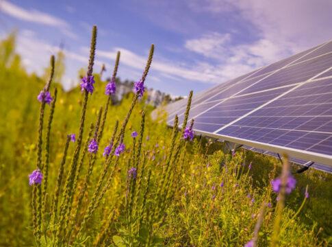 parco-solare-aurora-enel-green-power-fotovoltaico-usa-minnesota-impianto-tecnologia-api-agricoltura-tutale-ecosistema-ambiente-EnergyCuE