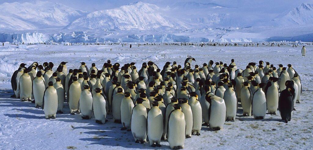 a68, iceberg, mondo, antartide, ghiacciai, scioglimento, tragitto, oceano, animali, conseguenze, ambiente, cambiamento climatico, temperatura, scienziati, studio, analisi, Energy Close-up Engineering