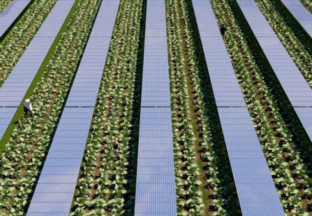 Algovoltaico: primo impianto pilota da ENEA e EGP