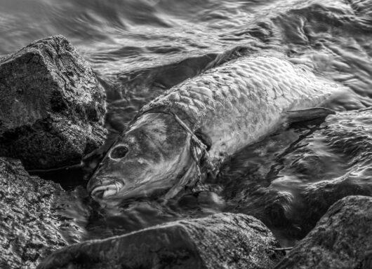 Sri Lanka: disastro ecologico in corso, rischi in aumento