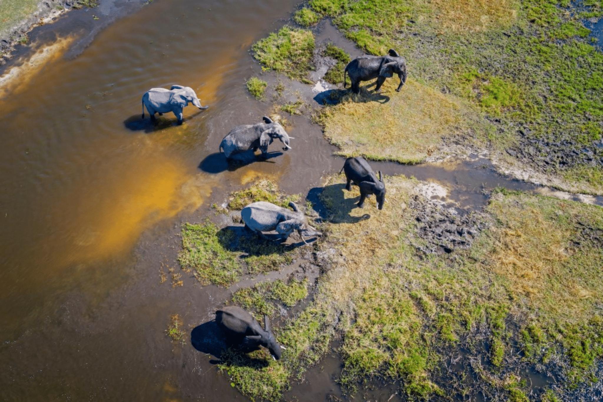 ReconAfrica, pozzi petroliferi, Namibia, Botswana, Kavango, licenze, elefanti, catastrofe ambientale, alghe tossiche, riscaldamento globale, ecosistema, comunità locali, IEA, zero emissioni, petrolio, Energy Close-up Egineering.